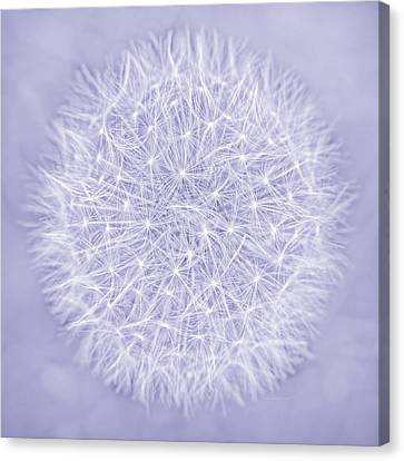 Dandelion Marco Abstract Lavender Canvas Print by Jennie Marie Schell