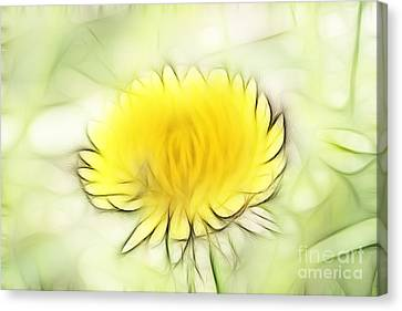Dandelion Canvas Print by Michal Boubin