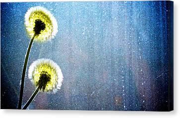 Dandelion Parachute Balls Canvas Print
