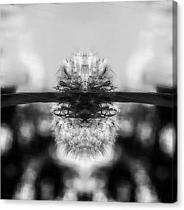Dandelion Reflection Canvas Print by Tommytechno Sweden