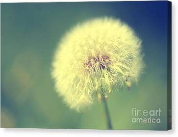 Canvas Print featuring the photograph Dandelion Seed Head by Karen Slagle
