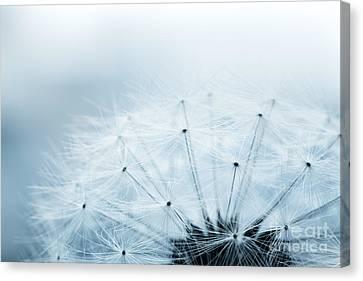 Dandelion Seeds Canvas Print by Mythja  Photography