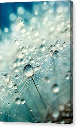 Canvas Print featuring the photograph Dandelion Starburst by Sharon Johnstone
