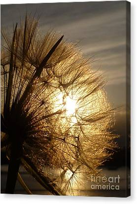 Dandelion Sunset Canvas Print