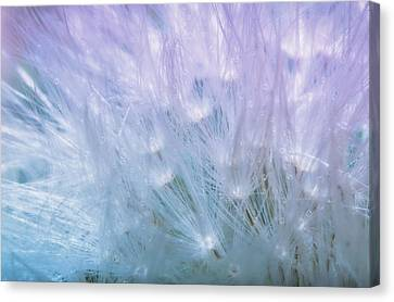 Fluffy Canvas Print - Dandelion Whispers by Camille Lopez