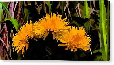Dandelions In Group Si By Leif Sohlman Canvas Print by Leif Sohlman