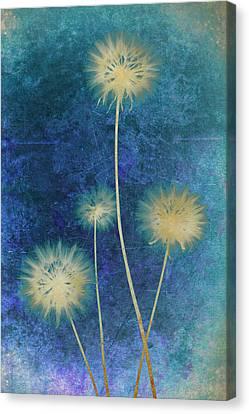Dandelions Canvas Print by Nicole Neuefeind