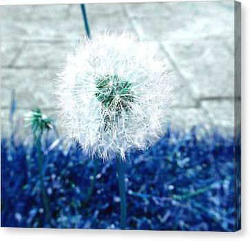 Canvas Print featuring the photograph Dande Clock Blue by Laurie Tsemak