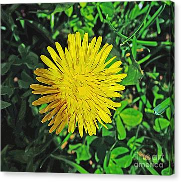 Dandy Lion Canvas Print by Luther Fine Art