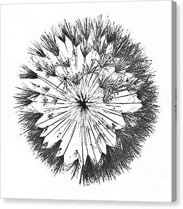 Canvas Print featuring the digital art Dandylion Black On White by Clayton Bruster