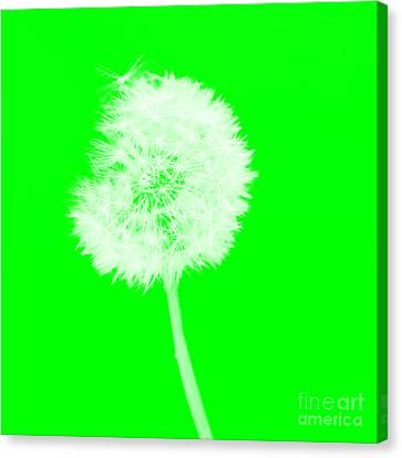 Canvas Print featuring the digital art Dandylion Green by Clayton Bruster