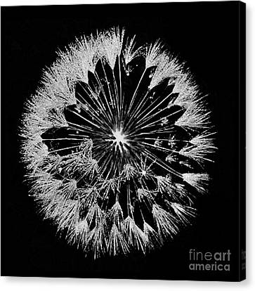 Canvas Print featuring the digital art Dandylion White On Black by Clayton Bruster