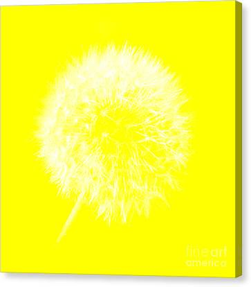 Canvas Print featuring the digital art Dandylion Yellow by Clayton Bruster
