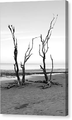 Dancing Trees Canvas Print by Thomas Leon