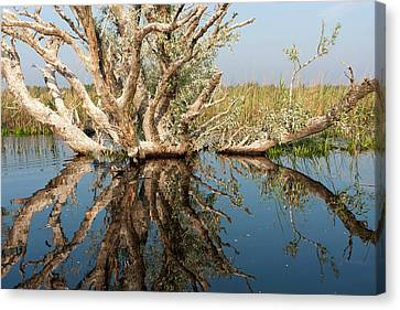 Flooding Canvas Print - Danube Delta During Spring by Martin Zwick
