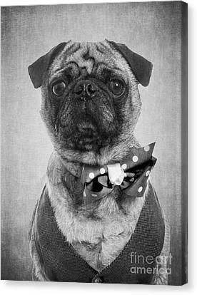 Dapper Dog Canvas Print by Edward Fielding