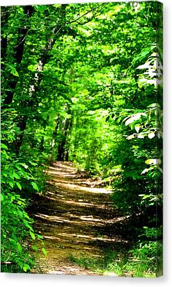 Dappled Sunlit Path In The Forest Canvas Print