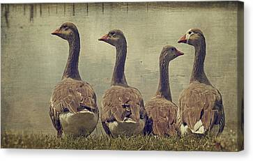 Dare To Be Different Canvas Print by Kathy Jennings