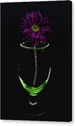 Dark Bloom Canvas Print