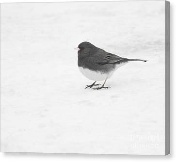 Canvas Print featuring the photograph Dark-eyed Junco In Winter by Anita Oakley