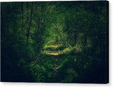Dark Forest Canvas Print by Daniel Precht