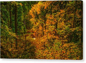 Canvas Print featuring the photograph Dark Forest by Dennis Bucklin