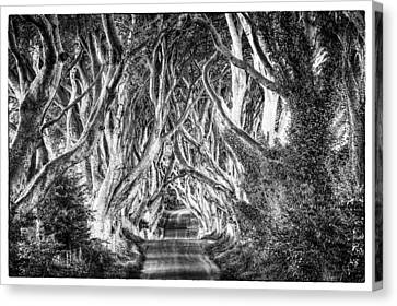 Dark Hedges Canvas Print by Craig Brown
