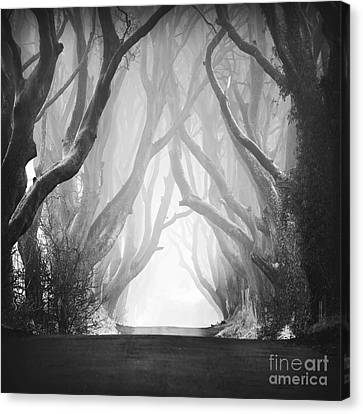 Dark Hedges IIi Canvas Print by Pawel Klarecki