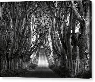 Dark Hedges Ireland Canvas Print by Tom Odaniell