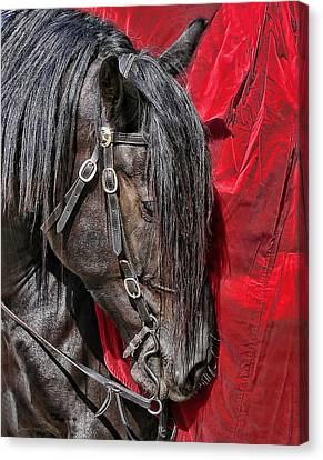 Dark Horse Against Red Dress Canvas Print by Jennie Marie Schell