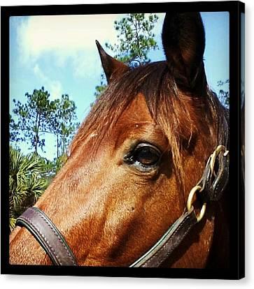 Dark Horse Canvas Print by Chasity Johnson
