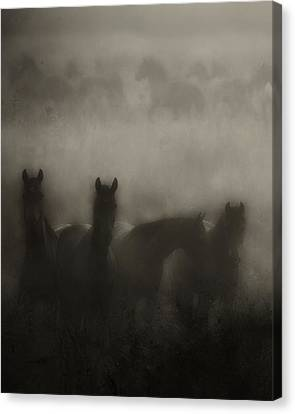 Dark Horse Dreams Canvas Print by Ron  McGinnis