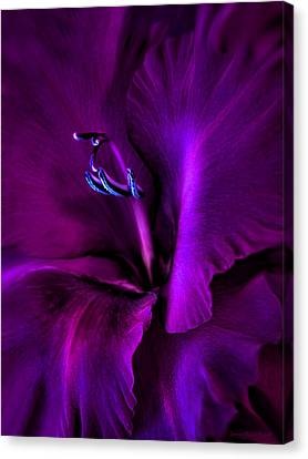 Dark Knight Purple Gladiola Flower Canvas Print by Jennie Marie Schell