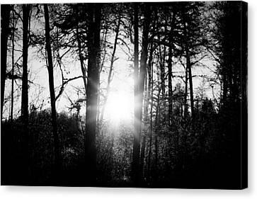 Dark Nature Canvas Print by Robert Hellstrom