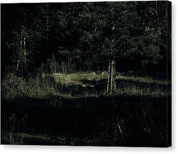Dark Woods Canvas Print by Alexei Biryukoff