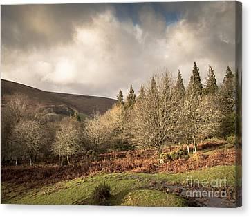 Dartmoor View Canvas Print by Jan Bickerton