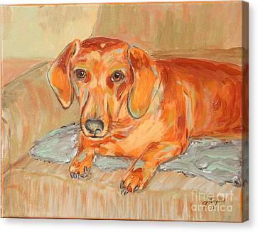 Canvas Print featuring the painting Daschund Portrait by Jeanne Forsythe