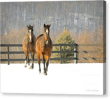 Canvas Print featuring the photograph Dashing Through The Snow by Carol Lynn Coronios