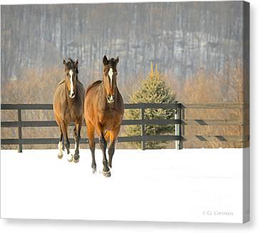 Canvas Print featuring the photograph Dashing Through The Snow by Carol Lynn Coronios