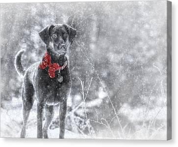 Dashing Through The Snow Canvas Print by Lori Deiter