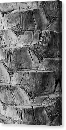 Date Palm Bark Canvas Print