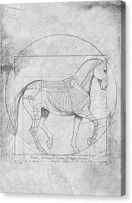 Da Vinci Horse Piaffe Grayscale Canvas Print by Catherine Twomey