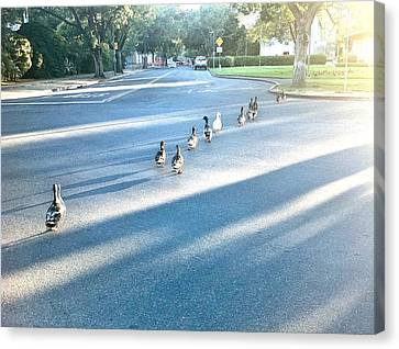 Canvas Print - Davis Ducks by Cadence Spalding