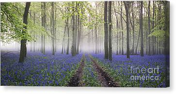 Early Spring Canvas Print - Dawn Bluebell Wood Panoramic by Tim Gainey
