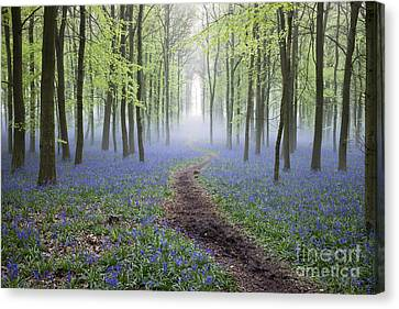 Early Spring Canvas Print - Dawn Bluebell Wood by Tim Gainey