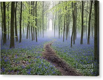Dawn Bluebell Wood Canvas Print by Tim Gainey