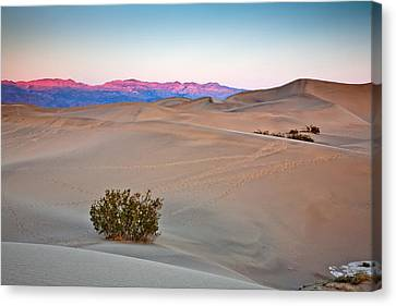 Dawn Dunes Canvas Print by Peter Tellone