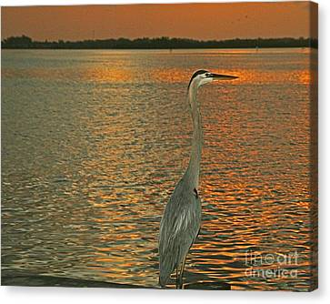 Canvas Print featuring the photograph Dawn Greets A Blue Heron by Joan McArthur