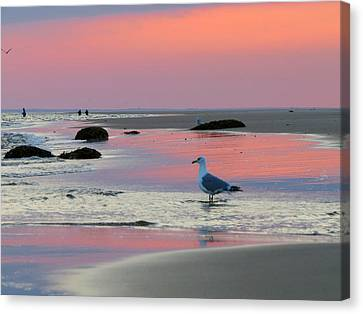 Canvas Print featuring the photograph Dawn In Pink by Dianne Cowen