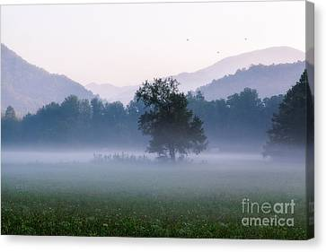Dawn In The Mountains Canvas Print by Deborah Scannell